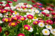 flowers-garden-colorful-colourful.jpg
