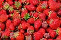 strawberries-berries-fruit-freshness-46174.jpeg